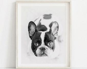 French Bulldog Print, Black White Dog Print, Puppy Wall Art, Puppy Art, Dog Art Print, French Bulldog Printable, Nursery Animal Decor