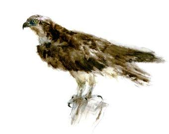 Balbuzard pêcheur Aquarelle - Aquarelle oiseau - impression 5 x 7 pouces -  0139 fd2480cff80
