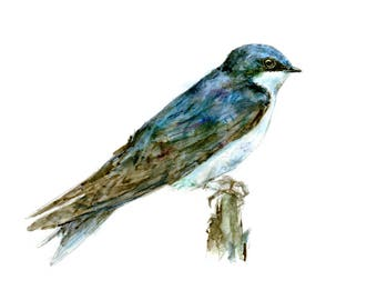 Tree Swallow watercolor painting - bird watercolor painting - 5x7 inch print - 0128