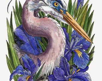 Great Blue Heron and Iris 8x10 Art Print