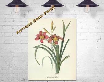 Gardener Gift Floral Decor Flower Print Antique Redoute Plant Art Farmhouse Decor Botanical Poster Agave Plant Book Print