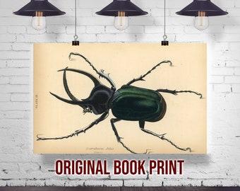 Jardine Naturalist/'s Library Print Antique Beetle Drawing Entomology Wall Art Print Beetles Original 1835 Hand Colored Engraving