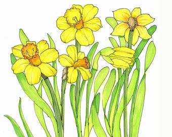 Daffodils hand drawn illustration with roots print