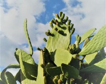 Cacti Blue Sky Print