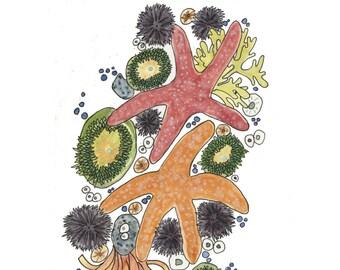 Starfish Watercolor Painting, Beach Inspired Art, Coastal Home Decor, Anemone Giclee Print, Shell Wall Art, Ocean Bathroom Art