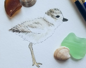 Plover Watercolor Print, Cape Cod Art, Bird Painting, Coastal Home Decor, Piping Plover, New England Inspired, Nursery Artwork
