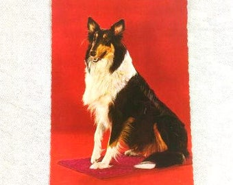 Vintage Collie Scottish Sheepdog Postcard Vintage Dog Postcard Antique Collie Postcard Collectible Postcard