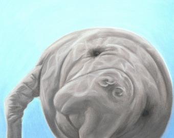 Manatee Art Digital Download, Manatee Gift, Ocean Decor, Florida Art