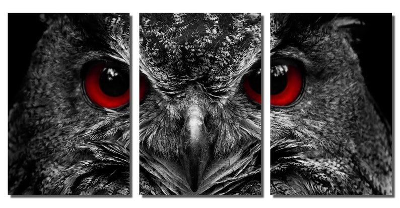 interior design Triptych 3 Panel split Blood Eyed Owl wall art Portrait Metal HD aluminum prints home wall decor Metal Prints