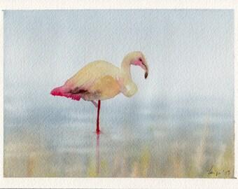 Fenicottero - Flamingo - Watercolor