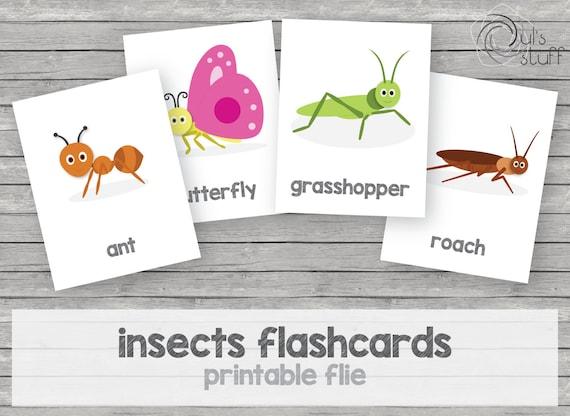 Tarjetas de insectos imprimibles para niños en inglés | Etsy