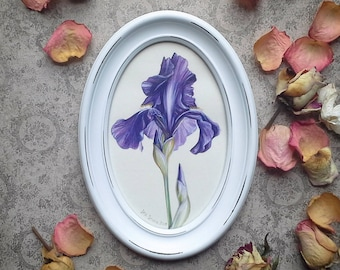 Violet Iris drawing mother's day gift Iris painting floral painting flower picture wall art botanical framed picture
