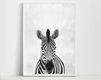 Zebra Print - Zebra Art - Zebra Poster - Animal Prints