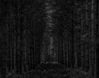 A Dark Forest Nave. A dark fine art photographic Giclée print