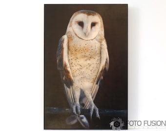 Barn Owl: Photo Transfer Art on Wood