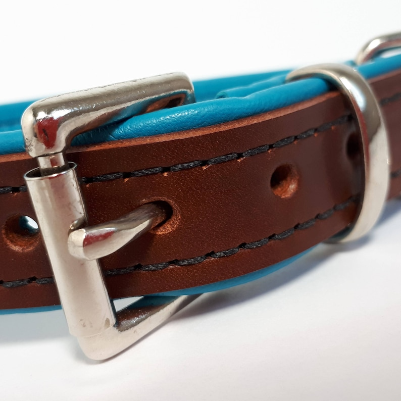 Chestnut brown on Turquoise Handmade to Order Padded Leather Dog Collar