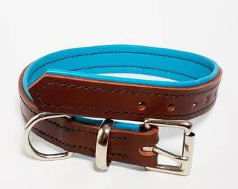 Chestnut brown on Turquoise - Padded Leather Dog Collar - Handmade to Order