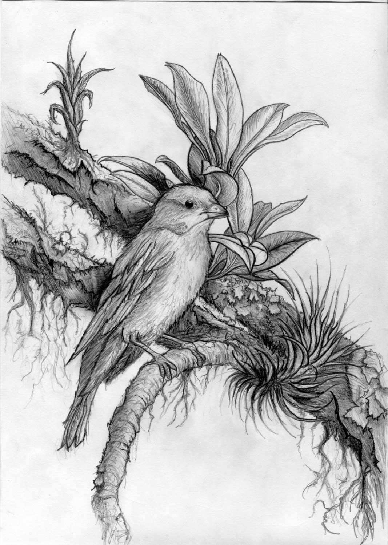 Dark Beautiful Hyper-realism Pencil drawing of a bird   Etsy