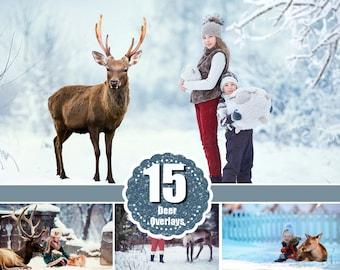 15 Real deer reindeer photoshop Overlays, animals collection, stag buck Deer, photography deer,  wild Animals, png file