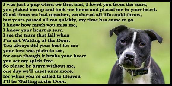 Staffordshire Bull Terrier Staffy Pet Dog Fridge Magnet  gift new