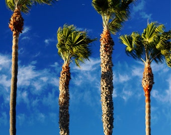 The Palm Trees - Art Photography Print