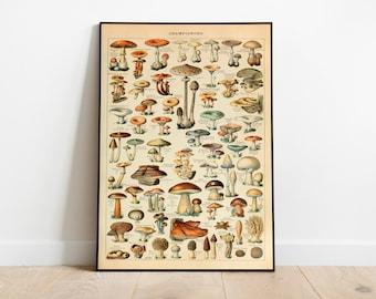 Mushroom Poster| Mushroom Diagram| Fungus Poster| Mushroom Print| Botanical Art| Champignon| Fungi Print| Fungi Art| Mushrooms Chart