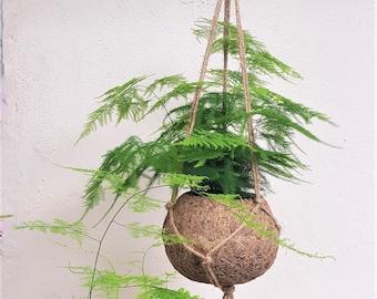 Asparagus Fern Kokodama Hanging Planter - plant + kokodama pot + hanger planter