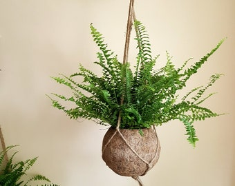 Boston Fern Kokodama Hanging Planter - plant + kokodama pot + hanger planter