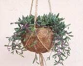 Purple Flush Senecio Herreianus Kokodama Hanging Planter - plant kokodama pot hanging planter