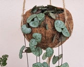 String of Hearts (Ceropegia Woodii) Kokodama Hanging Planter - plant kokodama pot hanger planter