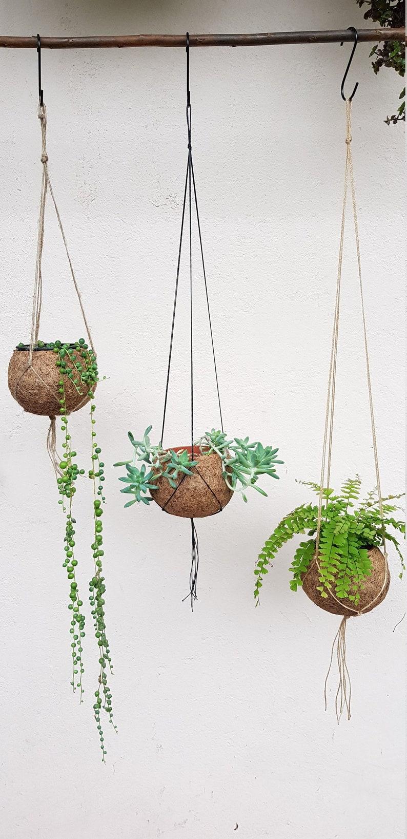 Kokodama hanging pot  12 cm diam 8 cm plant entry image 0