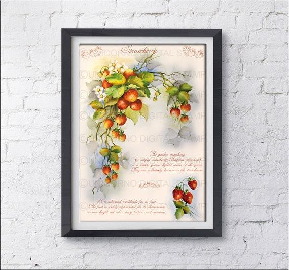 Stampe per cucina, Quadri cucina, Stampe con frutta, Stampe Botaniche,  Stampe Murali, Poster frutta, Stampe digitali