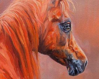 David Stribbling Original Oil Painting Of An Arabian / Arab Horse