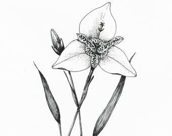 Digital hand drawn floral ink illustration lavender black etsy digital hand drawm floral ink illustration tiger flower black ink botanical illustration png jpg illustration exotic flower drawing mightylinksfo