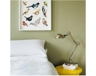 Collection of British Garden Birds: Giclée Print of illustration by Laura McKendry