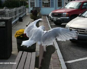 Belfast Landing, Maine, Seascape, Cove, Seagull, Boats, Docks, Fine Art, Wall Art
