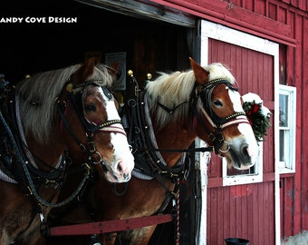 Ready to Pull, Draft Horses in Oxford County, Maine, Red Barn, Sleigh Ride, Christmas, Fine Art, Wall Art