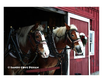 5 x7 Greeting Card with Envelope - Draft Horses in Oxford County, Maine, Red Barn, Sleigh Ride, Christmas
