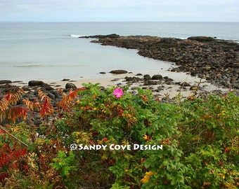 Last Rose of Summer, Marginal Way, Ogunquit, Maine, Ocean, Rocks, Wild Roses, Coast, Seashore, Fine Art Photo, Wall Art
