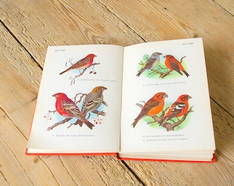 Vintage bird guide book, Vintage bird illustrations, Collage pages, Journaling supply, scrapbooking, wall decor, Swans ducks Owls songbirds