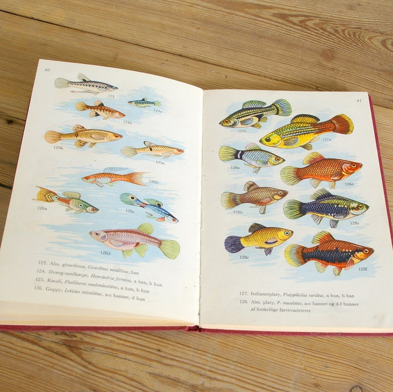 Vintage aquarium fish book, fish illustrations, fish guide color, old paper  supply, journaling prints, collage pages supplies, scrapbooking