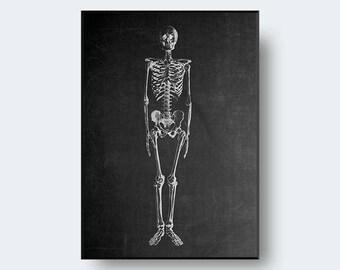 Chalkboard Skeleton Print | Skeleton Illustration, Human Anatomy, Chalkboard Art,Medical Student,Doctor Print,Printable Art,INSTANT DOWNLOAD