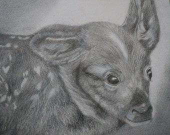 graphite portrait of a fawn