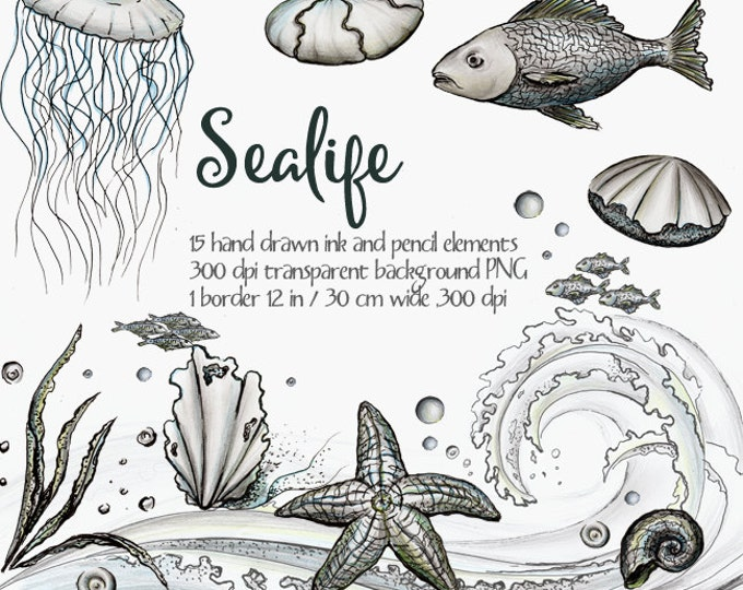 Digital clipart Sea life, ocean life clipart, ink clipart, black and white, hand painted clipart, fish, seashell, wave, sea strar, jellyfish
