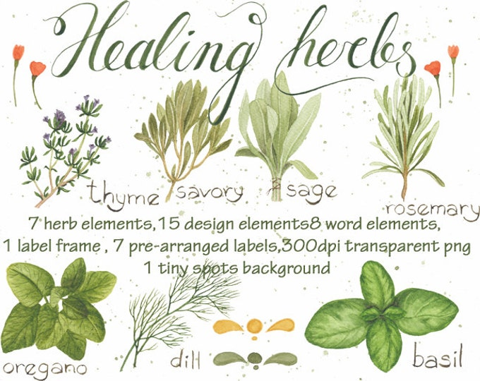 Watercolor clipart Healing Herbs, Digital Clipart, herbs clipart, hand drawn clipart, basil, savory, rosemary,sage, thyme, dill, label