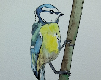 Blue Tit Watercolour