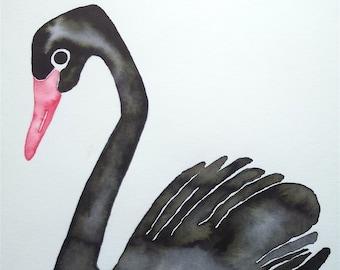 Black Swan illustration