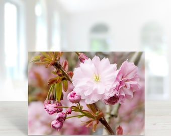 Pink Blossom Photographic Greeting Card