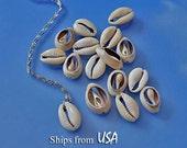 Cowrie Seashells (50) Back Cut, Craft and Jewelry Seashells, Oval Sea Shells, Shells for Crafts Frames Jewelry Box, Cowry Shells