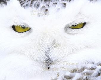 Eyes of a Snowy Owl